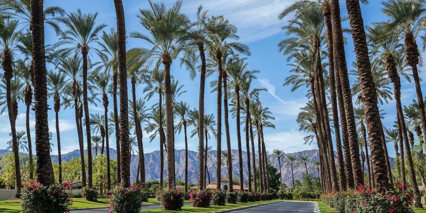 Coconut Palm Trees- California Lifestyle Realty